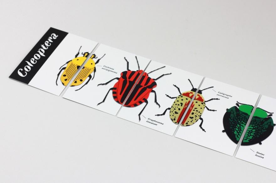 coleoptera_6BD