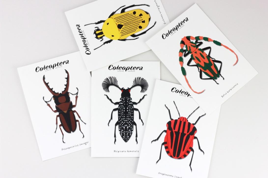 CP_coleoptera